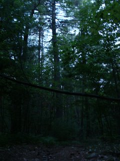 Trees at Dusk near Walden...